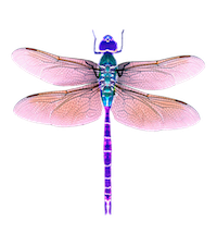 Dragonfly Stickers messages sticker-5