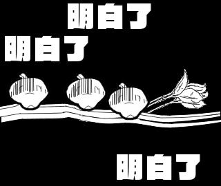 动画贴纸 小鸟 messages sticker-11