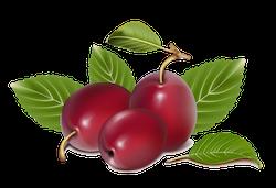 FruitMojis - Beautiful Fruit Stickers messages sticker-10