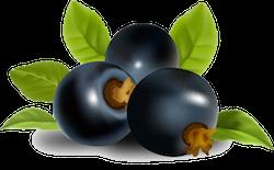 FruitMojis - Beautiful Fruit Stickers messages sticker-0