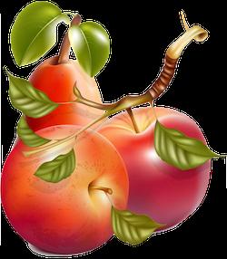 FruitMojis - Beautiful Fruit Stickers messages sticker-4