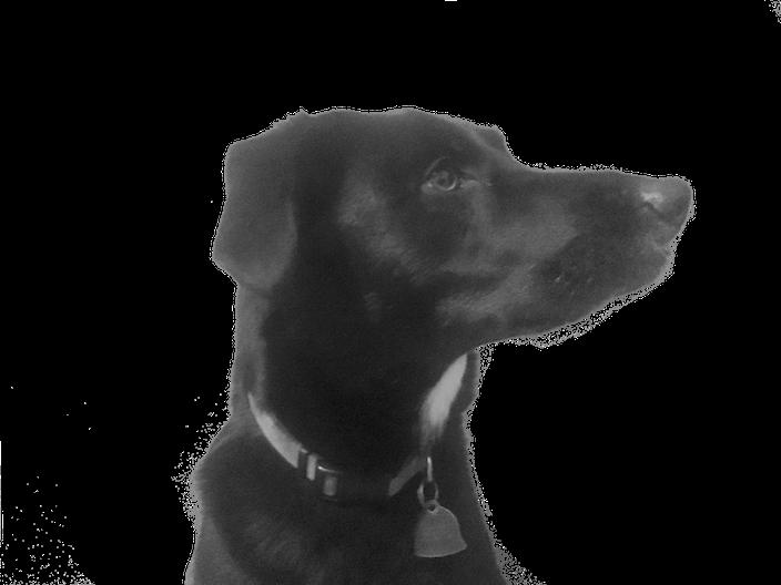 DogoMoji messages sticker-6