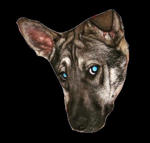DogoMoji messages sticker-11
