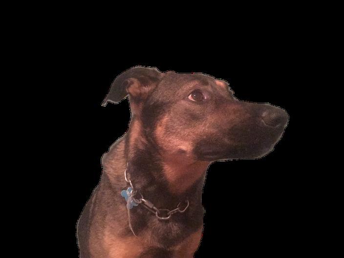 DogoMoji messages sticker-7