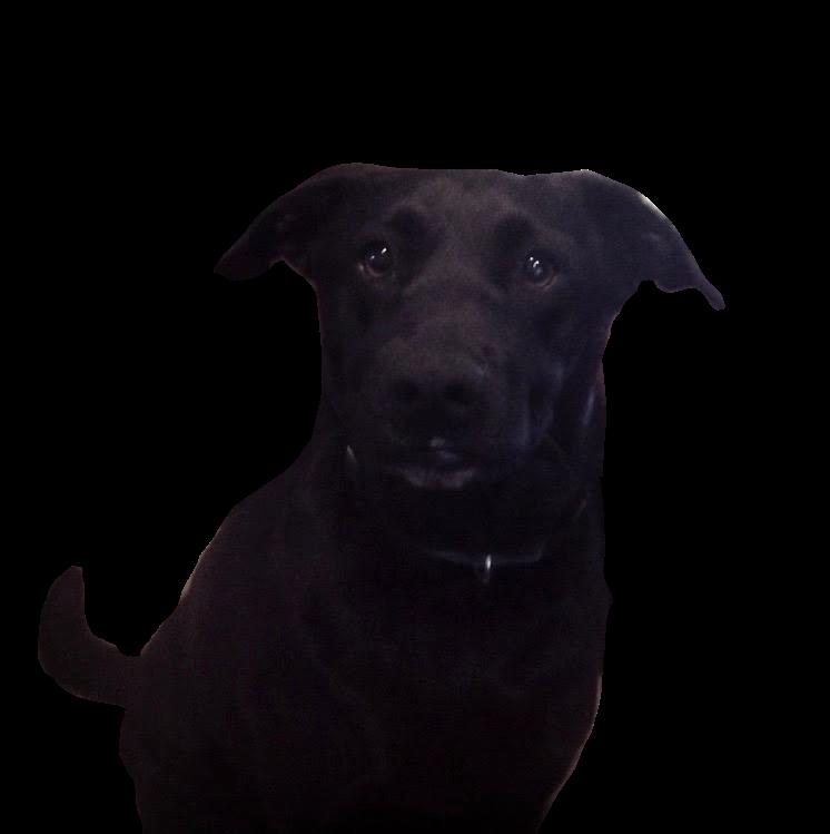 DogoMoji messages sticker-9