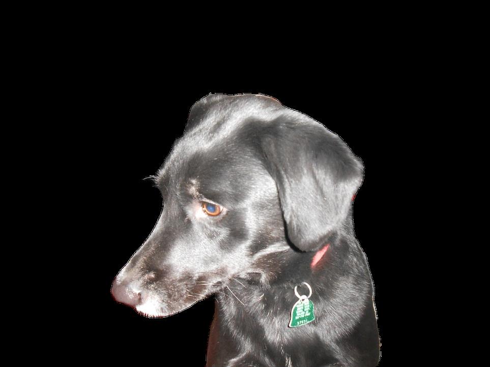 DogoMoji messages sticker-2