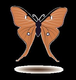 Butterfly Art Stickers messages sticker-11