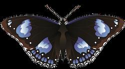 Butterfly Art Stickers messages sticker-5