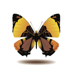 Butterfly Art Stickers messages sticker-6