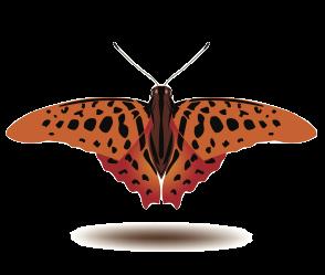 Butterfly Art Stickers messages sticker-10