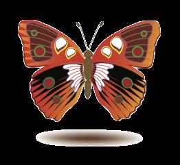 Butterfly Art Stickers messages sticker-9