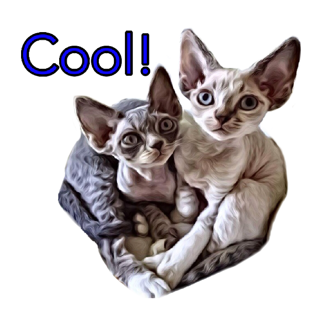 Littlest Devon Rex messages sticker-6