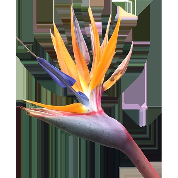 Hummingbird Flowers messages sticker-6
