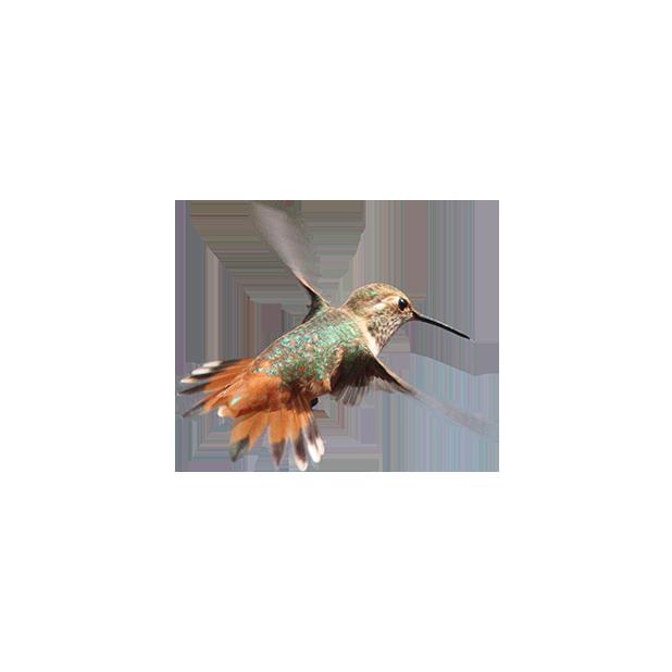 Hummingbird Flowers messages sticker-10