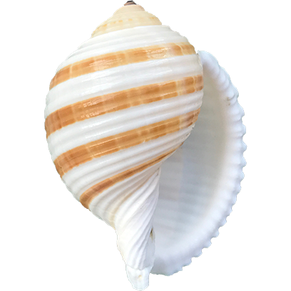 Shells! messages sticker-0