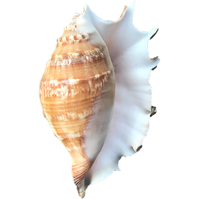 Shells! messages sticker-6
