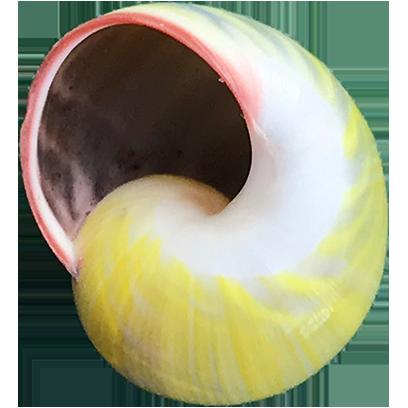 Shells! messages sticker-4