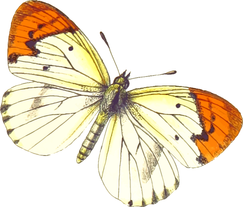 Butterfly Stickers: A Beauty Of Nature messages sticker-11