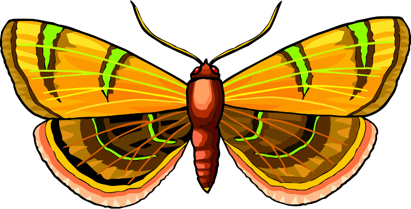 Butterfly Stickers: A Beauty Of Nature messages sticker-5