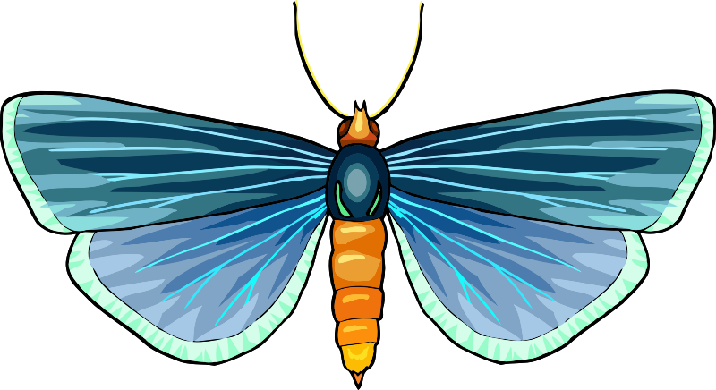 Butterfly Stickers: A Beauty Of Nature messages sticker-8
