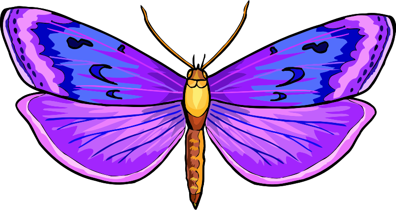 Butterfly Stickers: A Beauty Of Nature messages sticker-1