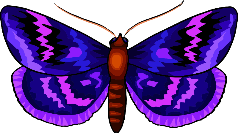 Butterfly Stickers: A Beauty Of Nature messages sticker-7