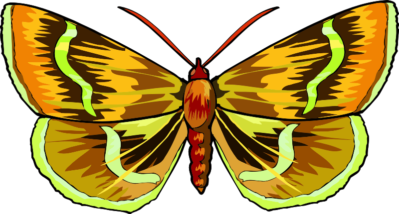 Butterfly Stickers: A Beauty Of Nature messages sticker-2