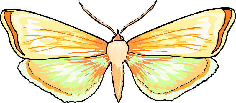 Butterfly Stickers: A Beauty Of Nature messages sticker-4