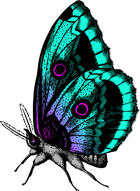 Butterfly Stickers: A Beauty Of Nature messages sticker-10