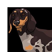 DachsMoji - Dachshund Emoji & Sticker messages sticker-9