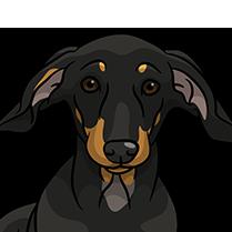 DachsMoji - Dachshund Emoji & Sticker messages sticker-11