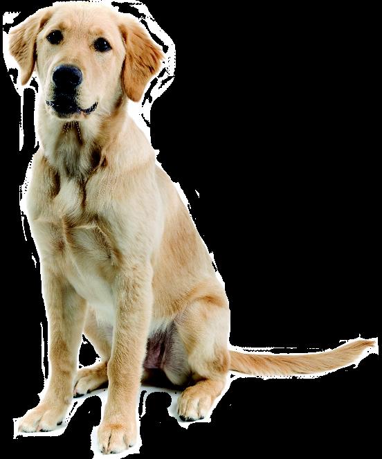 Dog messages sticker-7