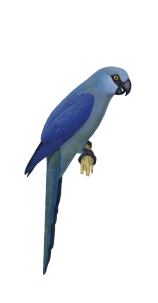 Macaw Stickerpack messages sticker-9