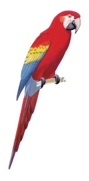 Macaw Stickerpack messages sticker-8