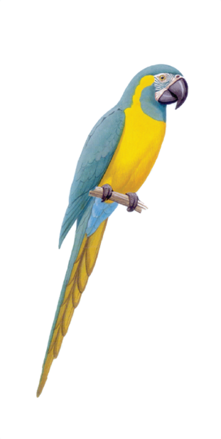 Macaw Stickerpack messages sticker-1