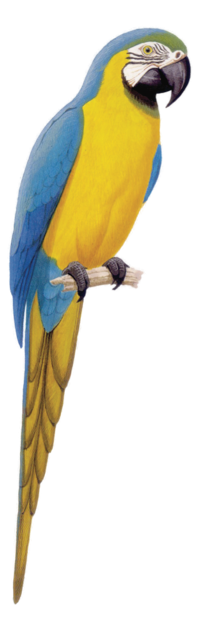 Macaw Stickerpack messages sticker-0