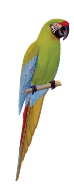 Macaw Stickerpack messages sticker-6