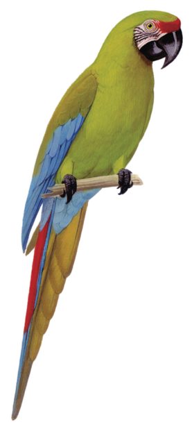 Macaw Stickerpack messages sticker-2
