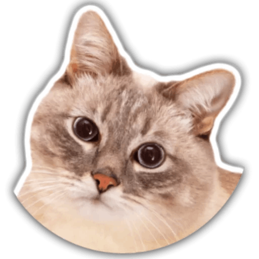 The hummy cat messages sticker-9