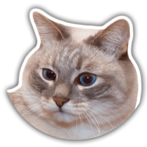 The hummy cat messages sticker-7
