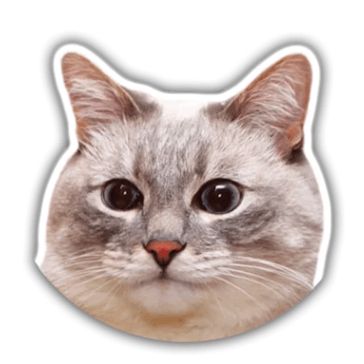 The hummy cat messages sticker-11
