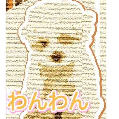 CuteDogsCuteDogs messages sticker-0