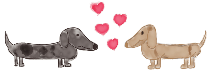 Adorable Dachshund Stickers messages sticker-4