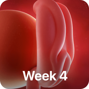 PregBuddy - Pregnancy App messages sticker-0