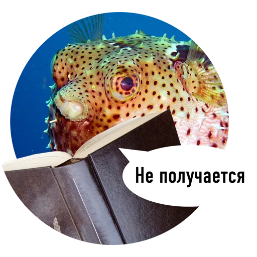 Fishes trying to read messages sticker-8