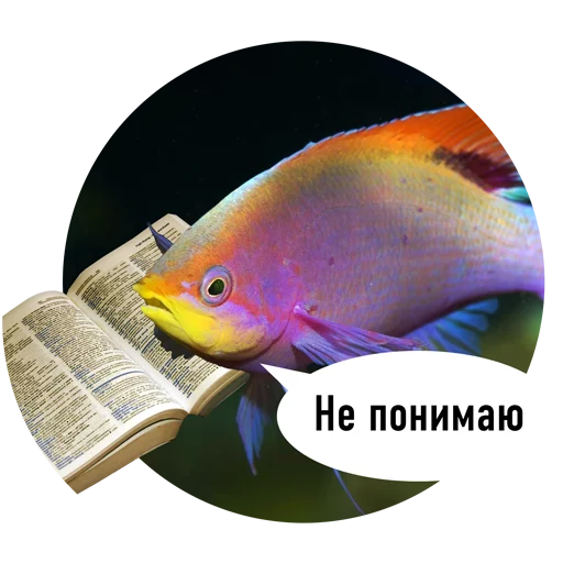 Fishes trying to read messages sticker-0