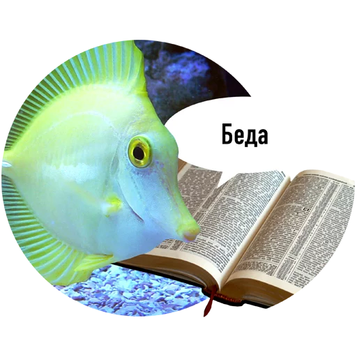 Fishes trying to read messages sticker-5