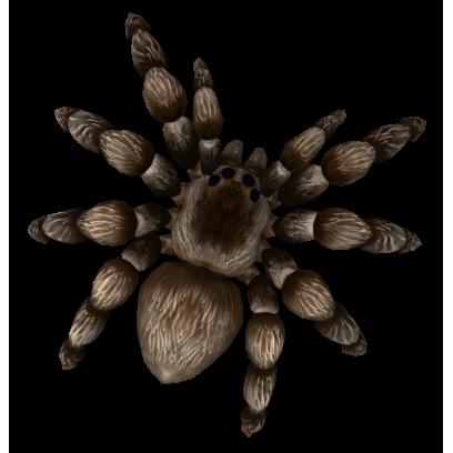 AR Spiders messages sticker-1