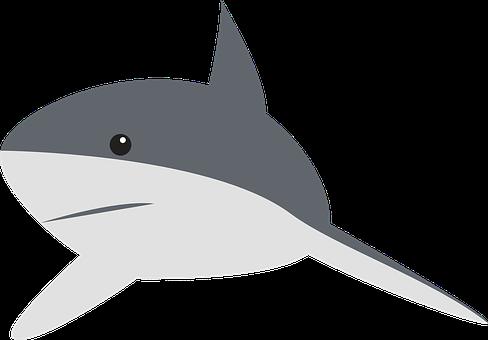 Shark Stickers - 2018 messages sticker-4