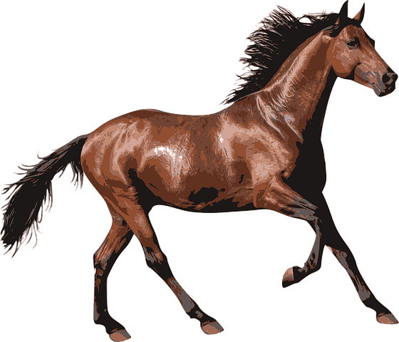 Horse Stickers - 2018 messages sticker-5